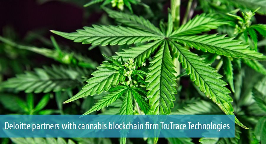 Deloitte partners with cannabis blockchain firm TruTrace Technologies