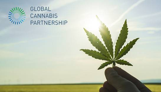 Consulting firm MNP joins Global Cannabis Partnership